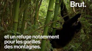 VIDEO. En République démocratique du Congo, 6 éco-gardes ont été tués par un groupe armé (BRUT)