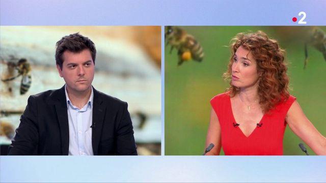 Attaque d'abeilles en Haute-Loire : un drame spectaculaire, mais rare