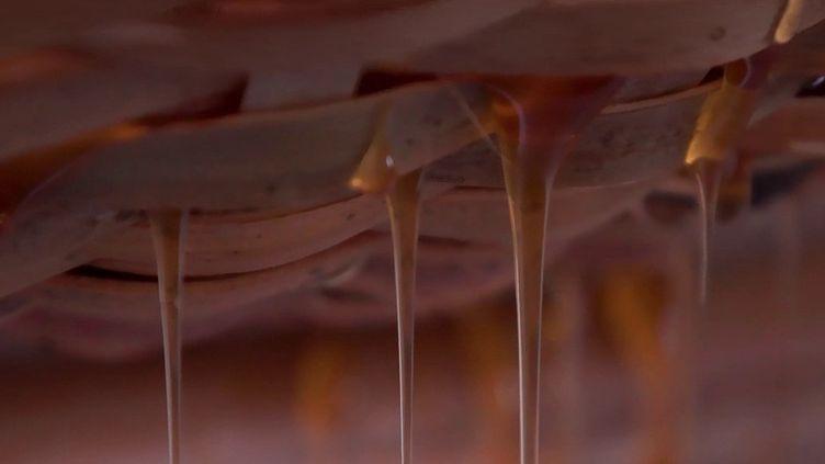 Apiculture durable : le miel de karité, un trésor venu du Bénin (France 2)