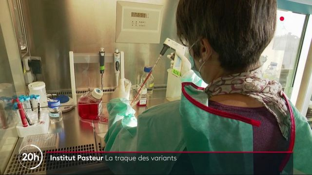 Covid-19 : l'Institut Pasteur traque les variants