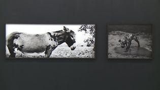 Les animaux et le noir et blanc au centre de l'oeuvre artistique de Jean-François Spricigo (Capture d'image / France Télévisions)