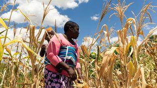 Une femme et son enfant dans un champ de maïs dans la zone rurale de Mutoko touché par la sécheresse en mars 2019 (JEKESAI NJIKIZANA / AFP)