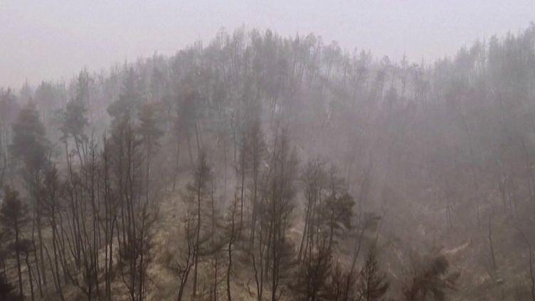 Incendies en Grèce : des dégâts d'une ampleur sans précédent (FRANCE 2)