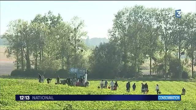 Melon : la star est de retour dans le Poitou