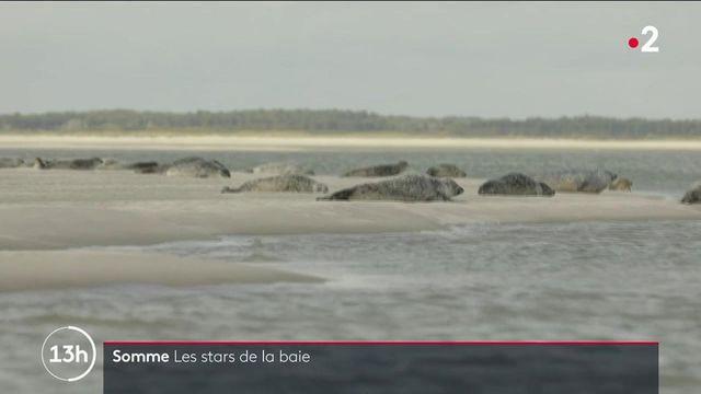 Somme : les phoques et les oiseaux migrateurs règnent sur la baie