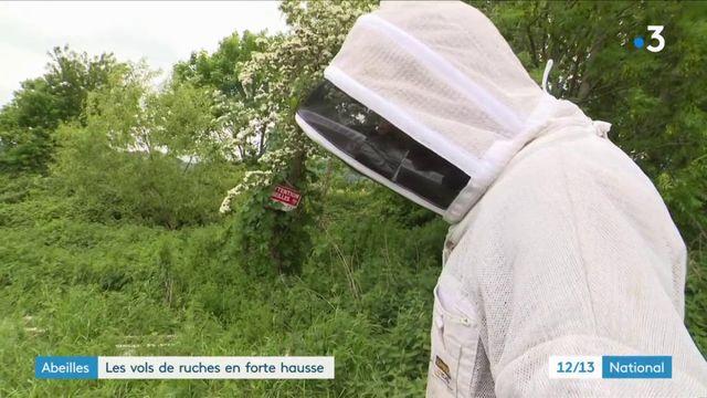 Abeilles : les vols de ruches en forte hausse
