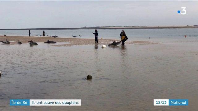 Ile de Ré : des dauphins échoués ont été sauvés