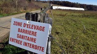 Les mesures de restriction de mouvements et de transport de volaille prises sur plusieurs communes du nord de la Vendéeont été levées dimanche 4 décembre 2016. (THIERRY BORDAS / MAXPPP)