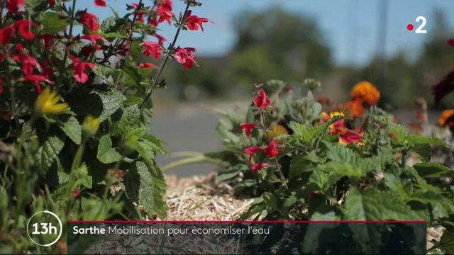 Sarthe : mobilisation pour économiser l'eau
