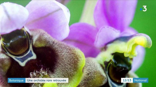 Haute-Garonne : une orchidée rare retrouvée