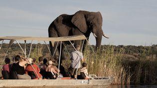 Des touristes face à un éléphant dans le parc national de Chobe (Botswana). (CHRIS JEK / AFP)