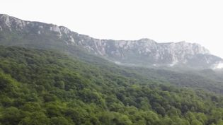 La forêt de Perucica est quasiment inconnue et se trouve pourtant au cœur de l'Europe. Dans les Alpes de Bosnie, ce territoire abrite de nombreux animaux, surveillés à distance par des gardiens protecteurs. (France 2)