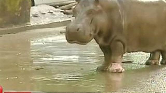 Géorgie : les inondations meurtrières libèrent les animaux du zoo