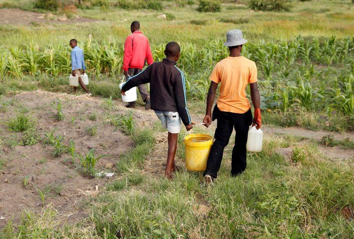 Des habitants reviennent d'un forage où ils ont pris de l'eau, près de Bulawayo, dans le sud-ouest du Zimbabwe. Photo prise le 17 janvier 2020. (REUTERS - PHILIMON BULAWAYO / X02381)