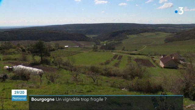 Gel : de nouvelles pratiques pour faire face aux aléas climatiques dans les vignes