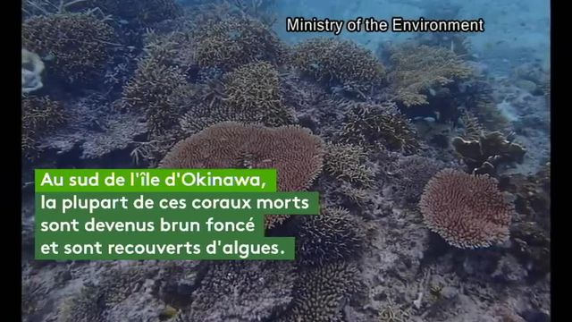 corail japon