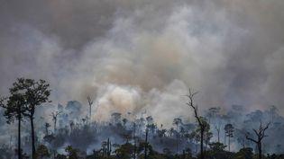 Un feu de forêt, le 27 août 2019 près d'Altamira (Brésil). (JOAO LAET / AFP)