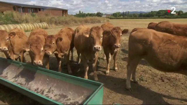 Pénurie de fourrage : des agriculteurs s'entraident