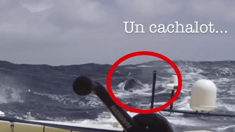 L'image du cachalot qui a contraint Kito de Pavant à l'abandon au Vendée Globe, le 6 décembre 2016. (CAPTURE ECRAN YOUTUBE)