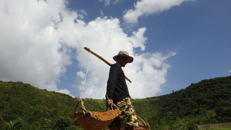 Un cultivateur transporte des paniers chargés d'argile dans une ferme à poivre. La culture des poivriers s'était effondrée sous le régime des Khmers rouges, pour connaître ensuite un renouveau dans les années 1990, avant de rechuter pour rebondir, en 2005, grâce au soutien d'une ONG.En 2010, le ministre du Commerce cambodgien avait fait un premier pas pour protéger ce poivre en lui accordant le label national IGP (Indication géographique protégée). Les prémices de la culture des poivriers remontent au 13e siècle, celle-ci n'ayant connue son apogée qu'au 19e, lors de la période coloniale. (Heng Sinith /AP)