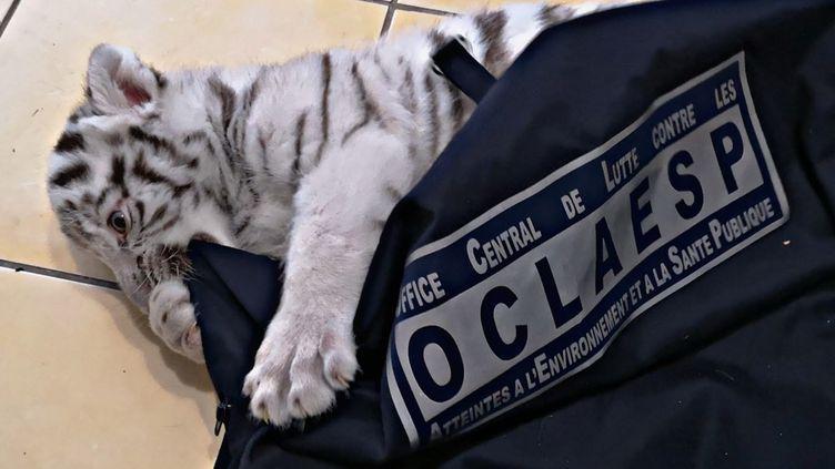 Le bébé tigre a été saisi. (GENDARMERIE NATIONALE)