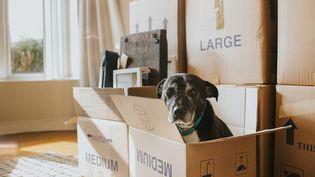 Quels sont vos droits en matière de déménagement ? (Illustration) (CATHERINE FALLS COMMERCIAL / MOMENT RF / GETTY IMAGES)
