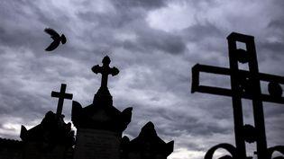 Un oiseau survole des tombes au cimetière de Loyasse à Lyon. (JEFF PACHOUD / AFP)