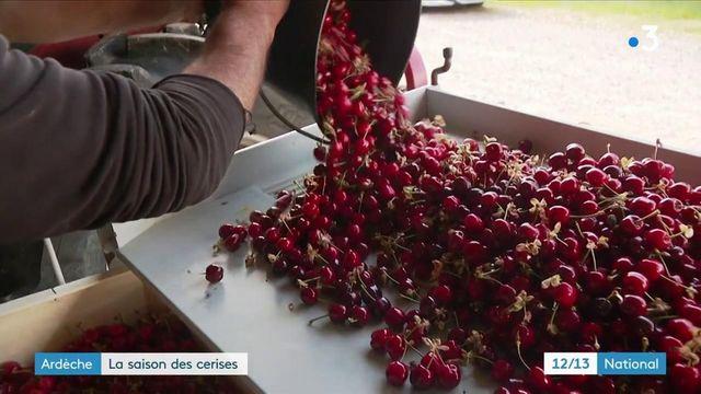 Ardèche : la saison des cerises débute timidement