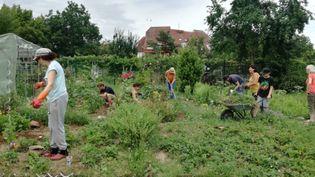 Tous au boulot dans le jardin communautaire ! (ISABELLE MORAND / CRCV / RADIO FRANCE / FRANCE INFO)