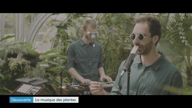 Labotanique Duo pop végétale