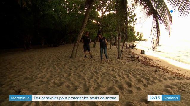 Martinique : bénévoles et scientifiques protègent les tortues lors de la ponte des œufs