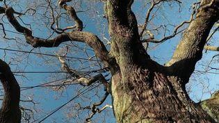 Les forêts couvraient autrefois la moitié de la surface du globe, c'est moins de 10% aujourd'hui. Cinq forêts remarquables et fascinantes ont cependant été préservées. Jeudi 6 février, direction l'Angleterre, pour découvrir la célèbre forêt de Sherwood. (FRANCE 2)