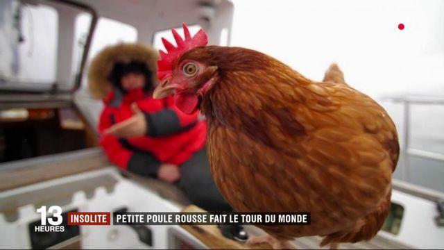 Le Breton Guirec Soudée raconte son voyage autour du globe avec sa poule