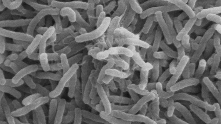Le ministère de la Santé et l'Institut Pasteur ont admis la responsabilité du vibrion du choléra le 23 août