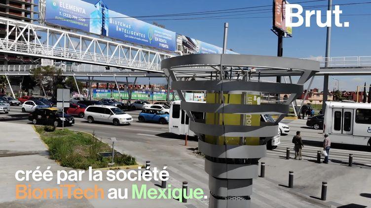 VIDEO. Au Mexique, un arbre-robot capable d'aspirer la pollution (BRUT)