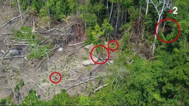 Amazonie : un drone filme une tribu encore inconnue