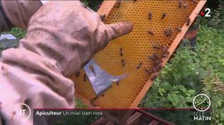 Du miel en Côte-d'Or. (France 2)
