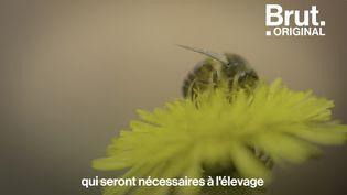VIDEO. 4 conseils pour préserver les abeilles au quotidien (BRUT)