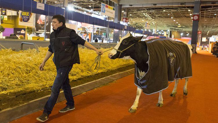 La première vache a fait son entrée au Salon de l'agriculture de Paris, jeudi 25 février. (GEOFFROY VAN DER HASSELT / AFP)