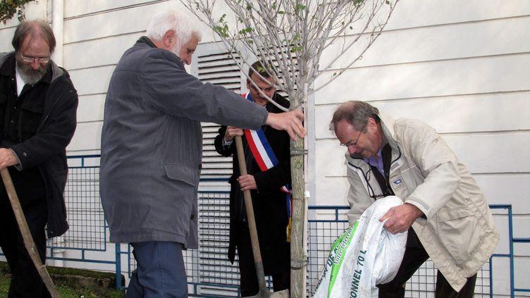 """Romain Colas, maire PS de Boussy-Saint-Antoine,et des représentants du Grand Orient de France plantent,le 10 décembre 2011, un """"arbre de la laïcité"""", vandalisé en janvier 2014. (MAXPPP)"""