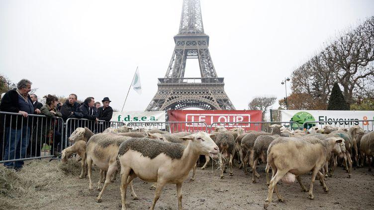 Des bergers manifestent contre le loup, le 27 novembre 2014 à Paris. (MAXPPP)