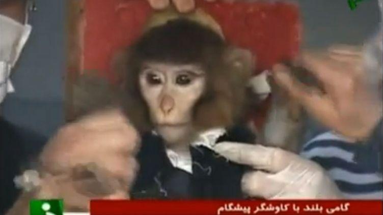 Les images diffusées par les médias iraniens montrent un petit singe installé dans une fusée baptisée Kavoshgar sur un pas de tir,le 28 janvier 2013. (FRANCETV INFO / APTN)