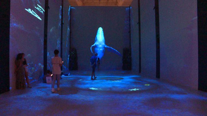 Le sol tactile permet une interaction avec les mouvements des visiteurs. (France 3 Côte d'Azur / S. Neuquelman)