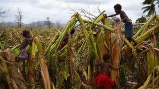 Des enfants jouent dans une plantation de bananes dévastée par le passage du cyclone Pam à Mele (Vanuatu), le 19 mars 2015. (JEREMY PIPER / AFP)