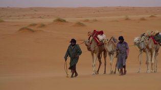 La rédaction du 20 Heures est partie en Mauritanie, dans le désert du Sahara, pour vous faire découvrir des chameliers chargés de livrer des marchandises et qui connaissent les lieux dans les moindres recoins. (France 2)