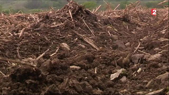 Environnement : pourquoi les sols s'épuisent-ils ?