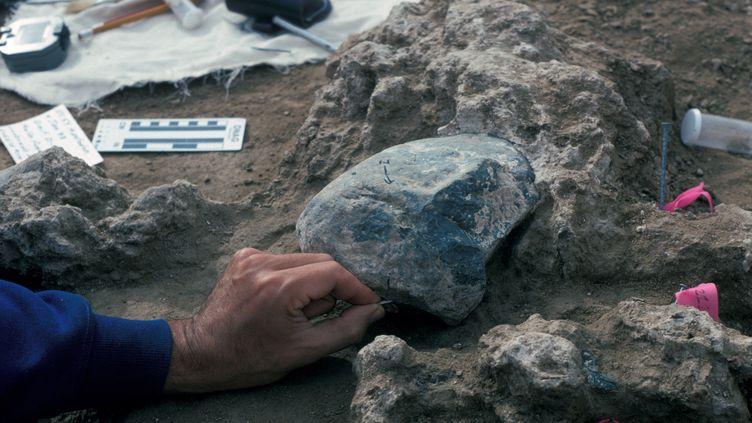 Une pierre ayant vraisemblablement servid'enclume, découverte sur le Cerutti Maston site, en Californie (Etats-Unis), le 4 janvier 1993. (SAN DIEGO NATURAL HISTORY MUSEUM)