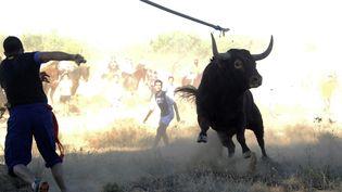 """Un homme jette une lance sur un taureau lors de la traque du """"Toro de la Vega"""" àTordesillas (Espagne), le 17 septembre 2013. (PEDRO ARMESTRE / AFP)"""