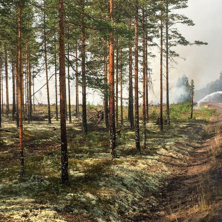 La forêt de Ljusdal en Suède, le 25 juillet 2018. (ELISE LAMBERT / FRANCEINFO)