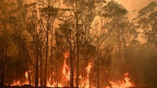 Un incendie à proximité de la ville de Moruya en Australie, le 4 janvier 2020. (PETER PARKS / AFP)